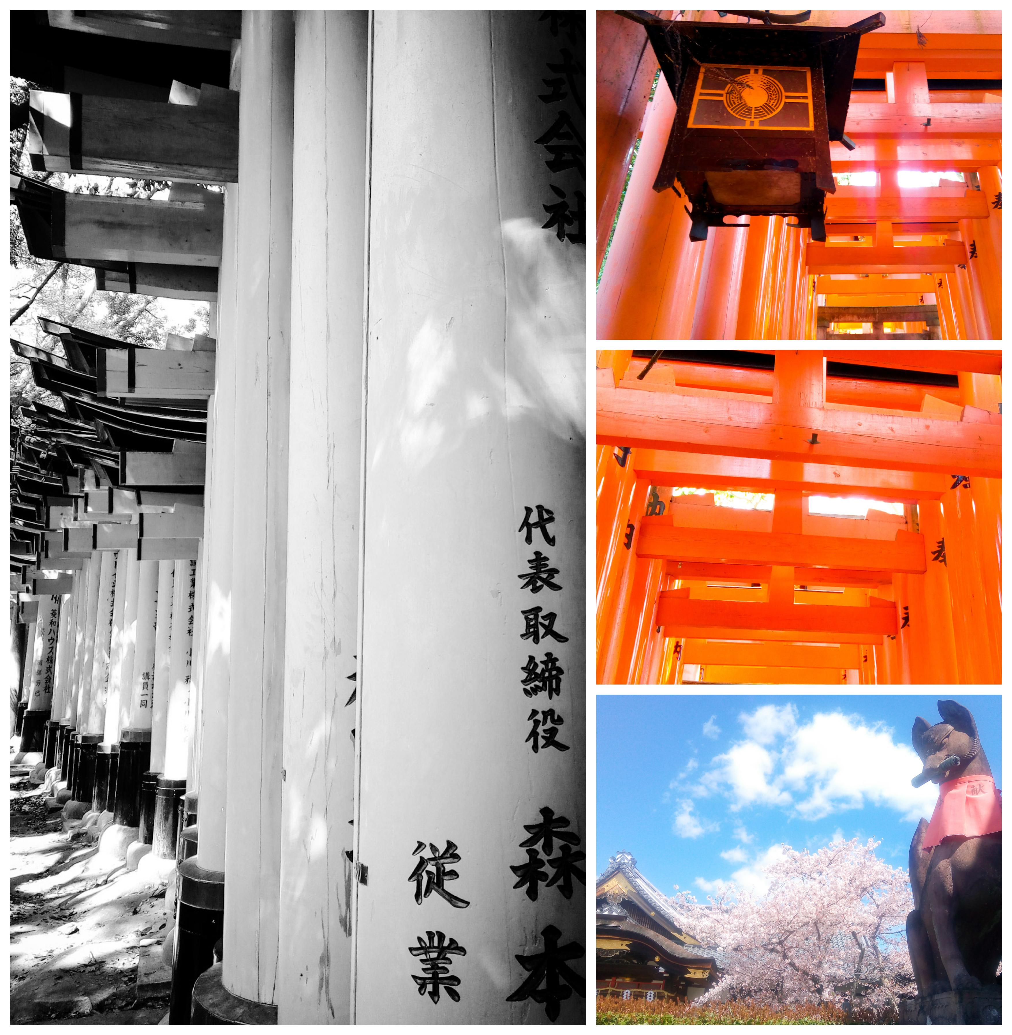 Urban photos - Fushimi Ward, Kyoto, Japan.'Fushimi Inari Taisha.' Located at the foot of Inari mountain, this shrine, dating back to 711, is most famous for its path of Torii gates. The path 'Senbon torii' contains over 1000 torii gates - which have been donated to the shrine since the Edo period. sketchbookexplorer.com @davidasutton @sketchbookexplorer Facebook.com/davidanthonysutton #japan #kyoto #fushimiward #fushimiinaritaisha #travel #travelblog #photography #cheeryblossom #cherryblossomseason