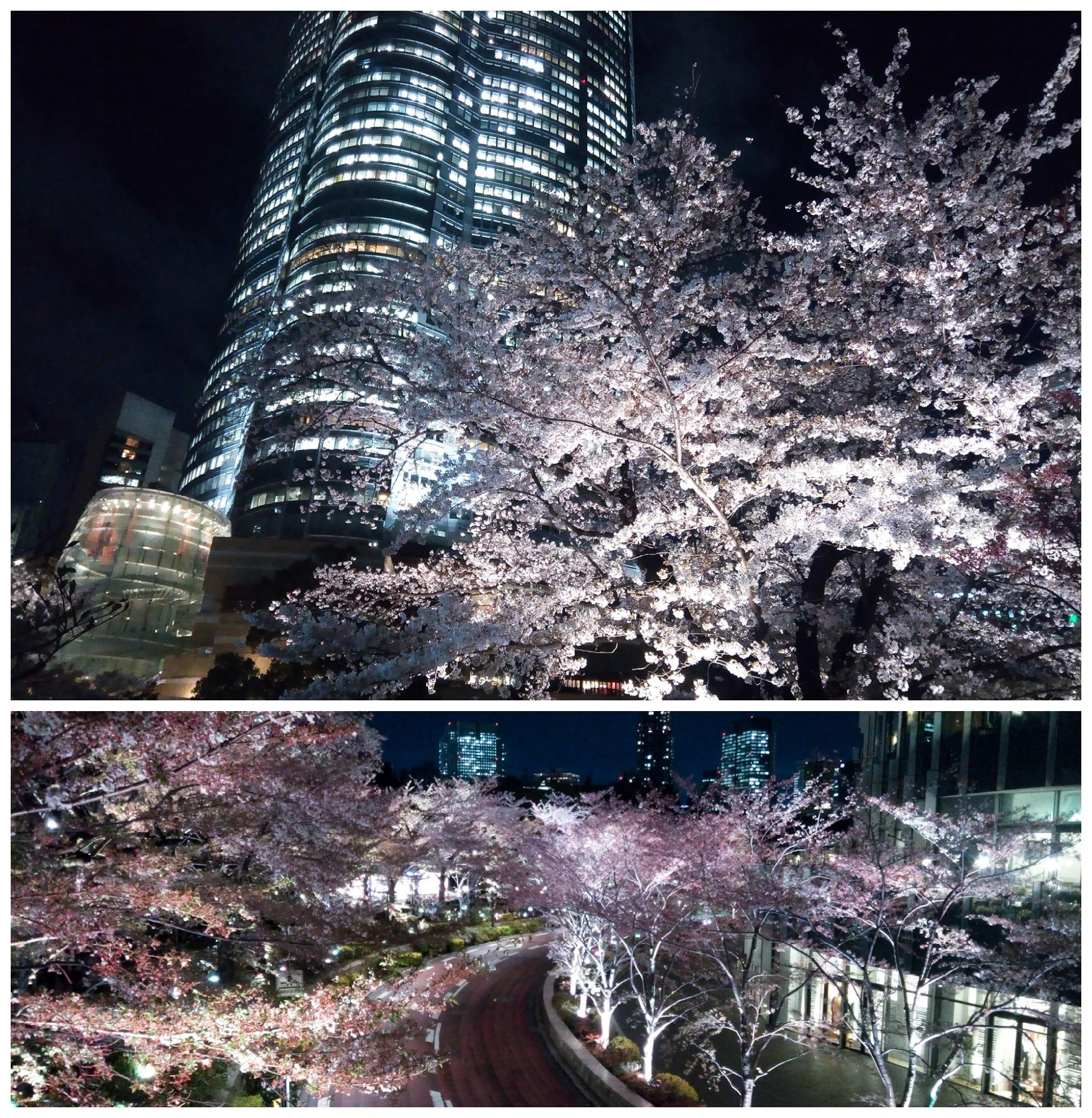 Urban photos - Chuo Ward, Osaka, Japan. 'Tokyo Midtown and Mori Gardens Roppongi.' Sakura Japan doesn't end when the sun goes down. sketchbookexplorer.com @davidasutton @sketchbookexplorer Facebook.com/davidanthonysutton #japan #tokyomidtown #morigardenstokyo #tokyo #travel #travelblog #photography #cheeryblossom #cherryblossomseason