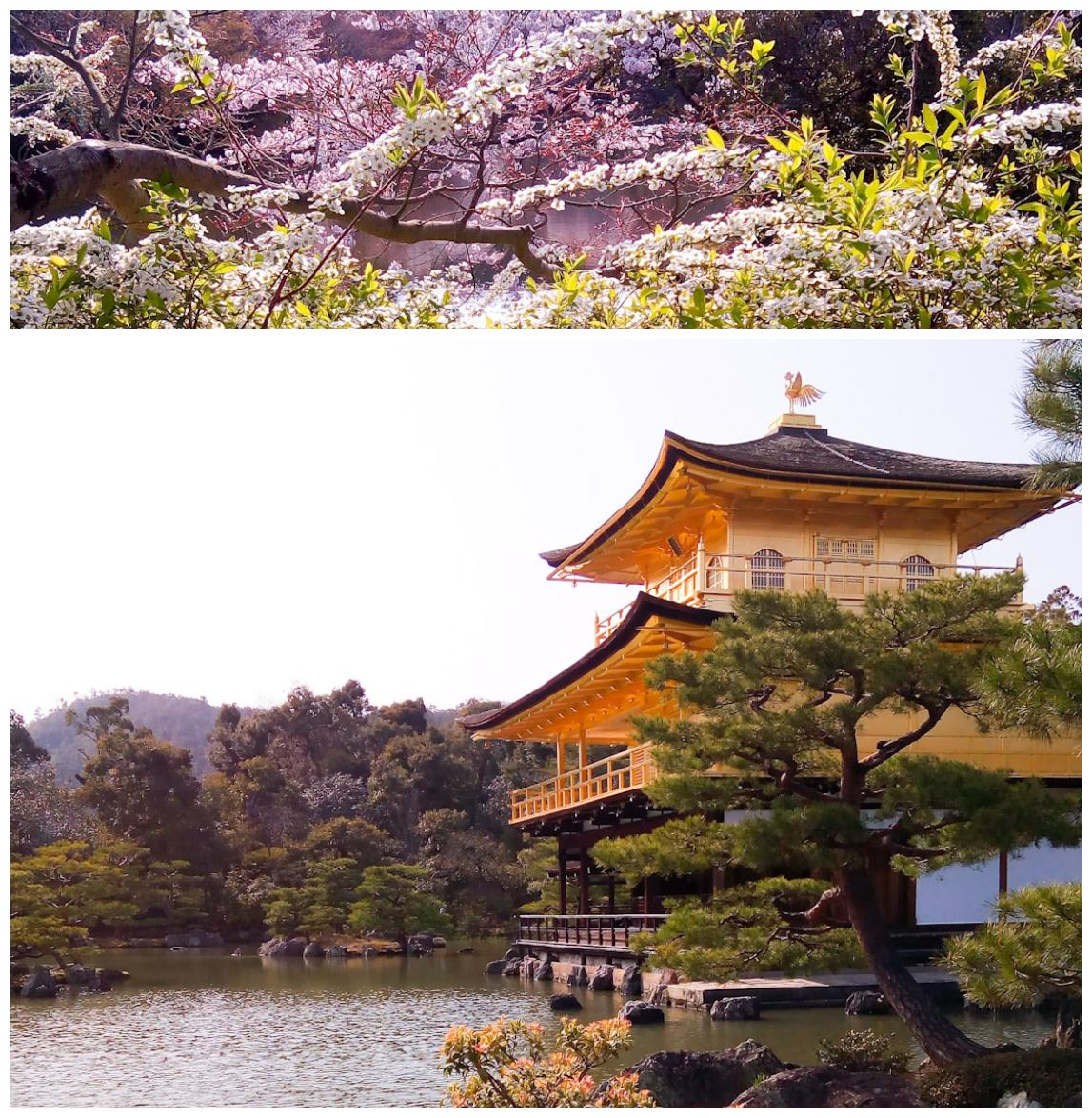 Urban Photos - Kita Ward, Kyoto, Japan. 'Kinkaku-ji.' Kinkakuji 'Temple of the Golden Pavilion' was built in 1397 and reconstructed in 1955, after a novice monk burned it down. The Zen Buddhist Temple is one of Japan's biggest tourist attractions. So be warned, it gets a lot of visitors, which does lessen the visitor's experience. As I mentioned before, especially in Kyoto, the main tourist attractions can be extremely busy, but don't let influence your Kyoto experience. There are so many less tourist filled wonders to be found. I would recommend also organically exploring the city, rather than just following the common checklist of a small number of popular sites. After all the city does boast 2000 religious sites. sketchbookexplorer.com @davidasutton @sketchbookexplorer Facebook.com/davidanthonysutton #japan #kyoto #kitaward #kinkakuji #travel #travelblog #photography #cheeryblossom #cherryblossomseason