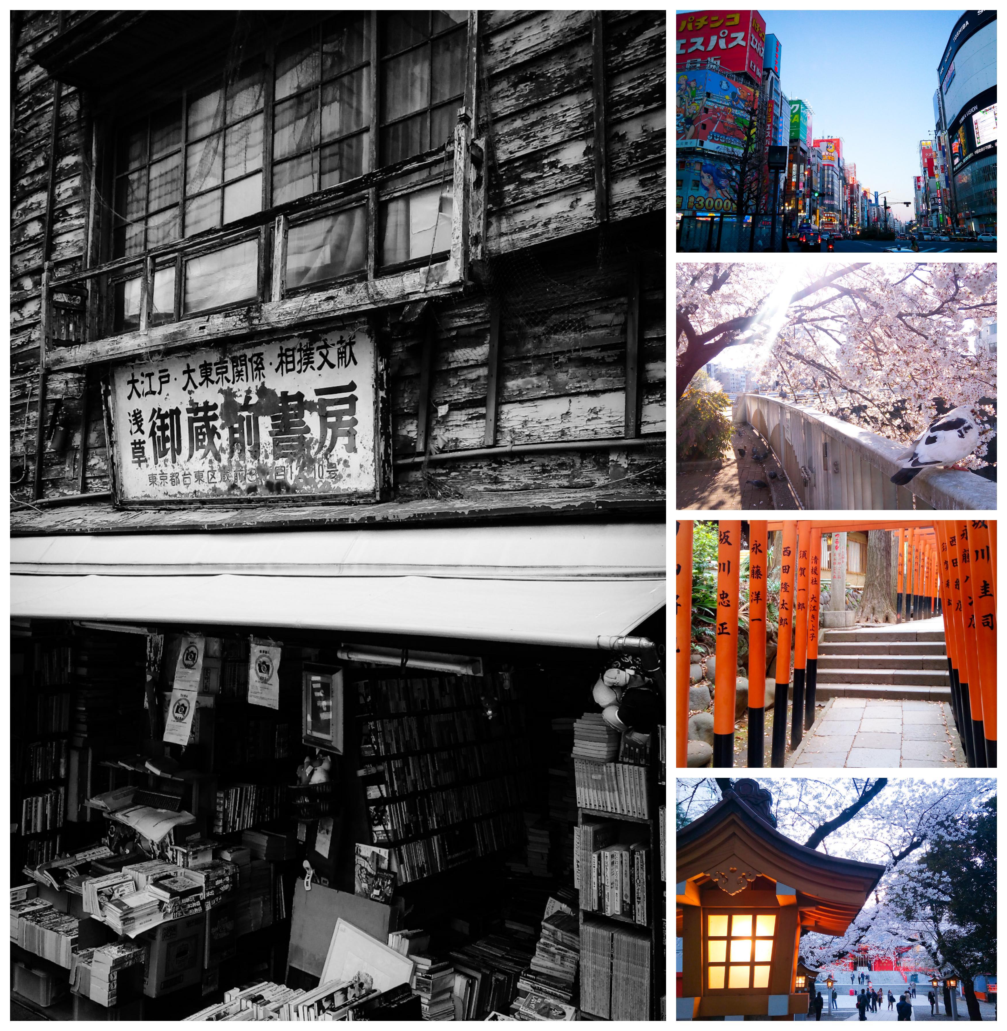 Urban photos - Shinkuku, Tokyo, Japan. 'Walk from Ikebukuro to Shinjuku.' Images taken on a walk from Ikebukuro to Shinjuku. Sometimes, just taking an unplanned stroll through a city, like Tokyo, can reveal unexpected and stunning sights. sketchbookexplorer.com @davidasutton @sketchbookexplorer Facebook.com/davidanthonysutton #japan #ikebukuro #zoshigayakishimoijitemple #shinjuku #travel #travelblog #photography #cheeryblossom #cherryblossomseason