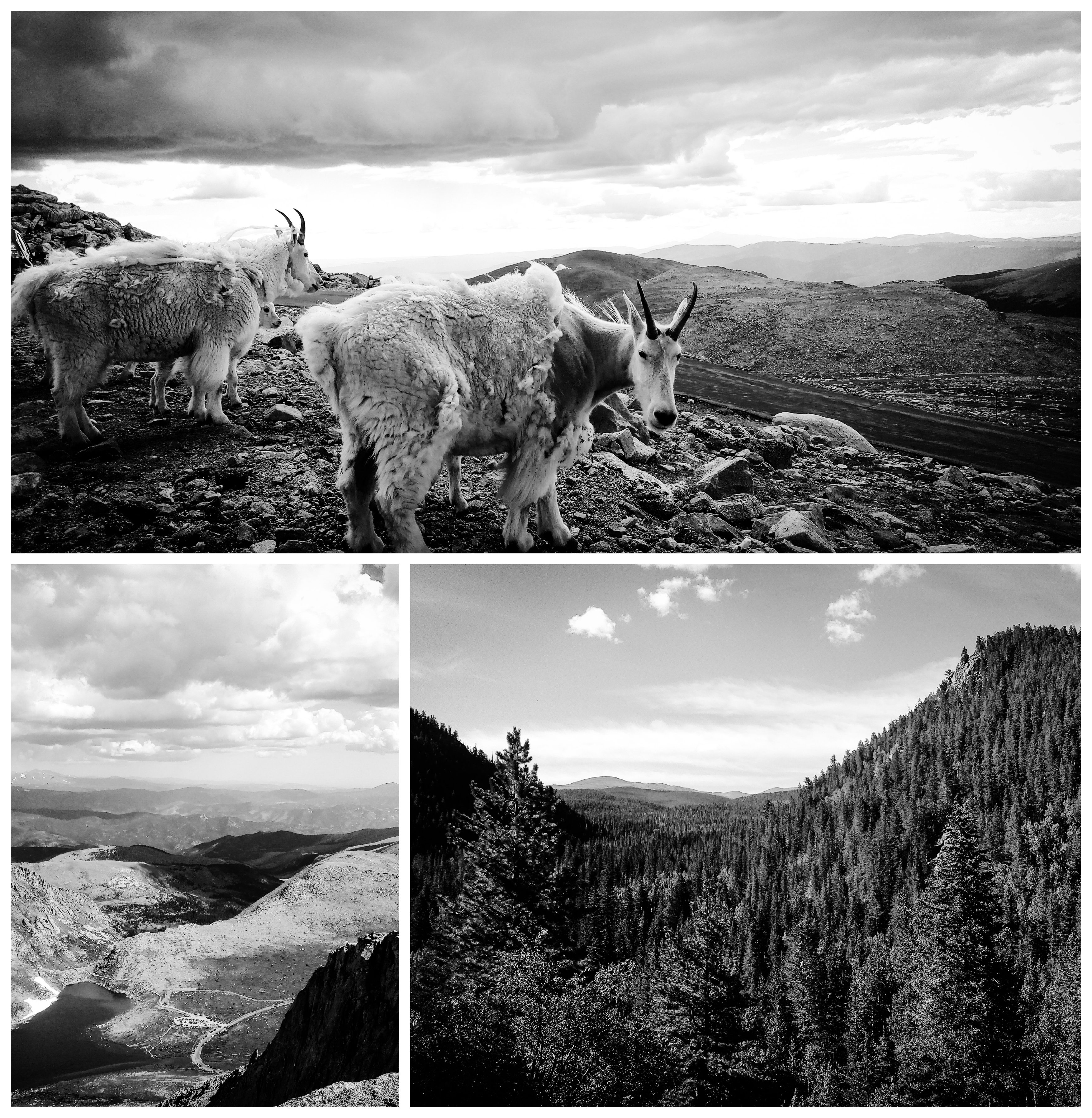 Nature Photos B&W - Clear Creek County, Colorado, US. 'Mount Evans.' The summit can be reach entirely by a road, that slowly snakes up the mountain. sketchbookexplorer.com @davidasutton @sketchbookexplorer Facebook.com/davidanthonysutton #mountevans #clearcreekcounty #colorado #unitedstates #USA #travel #travelblog #photography #nature #wildwest