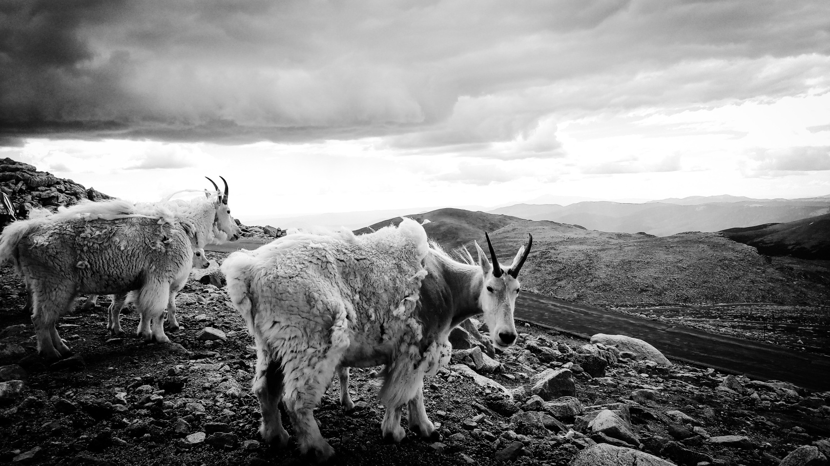 Nature photo – Clear Creek County, Colorado, US. 'Mount Evans.' Photograph from my latest travel art blog article 'Wild Colorado.' Now online - sketchbookexplorer.com @davidasutton @sketchbookexplorer Facebook.com/davidanthonysutton #photograph #photography #blackandwhite #us #clearcreek #colorado #mountevans #rockymountains #wild #travel #travelblog #unitedstates #northamerica #nature